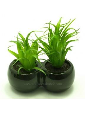 Kaktus podwójny zielony