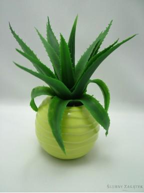 Aloes w zielonej doniczce